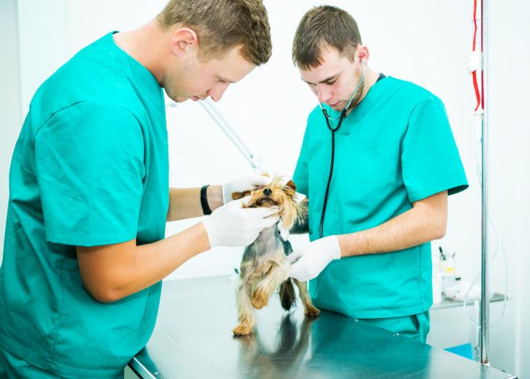 Послуги ветеринарної клініки
