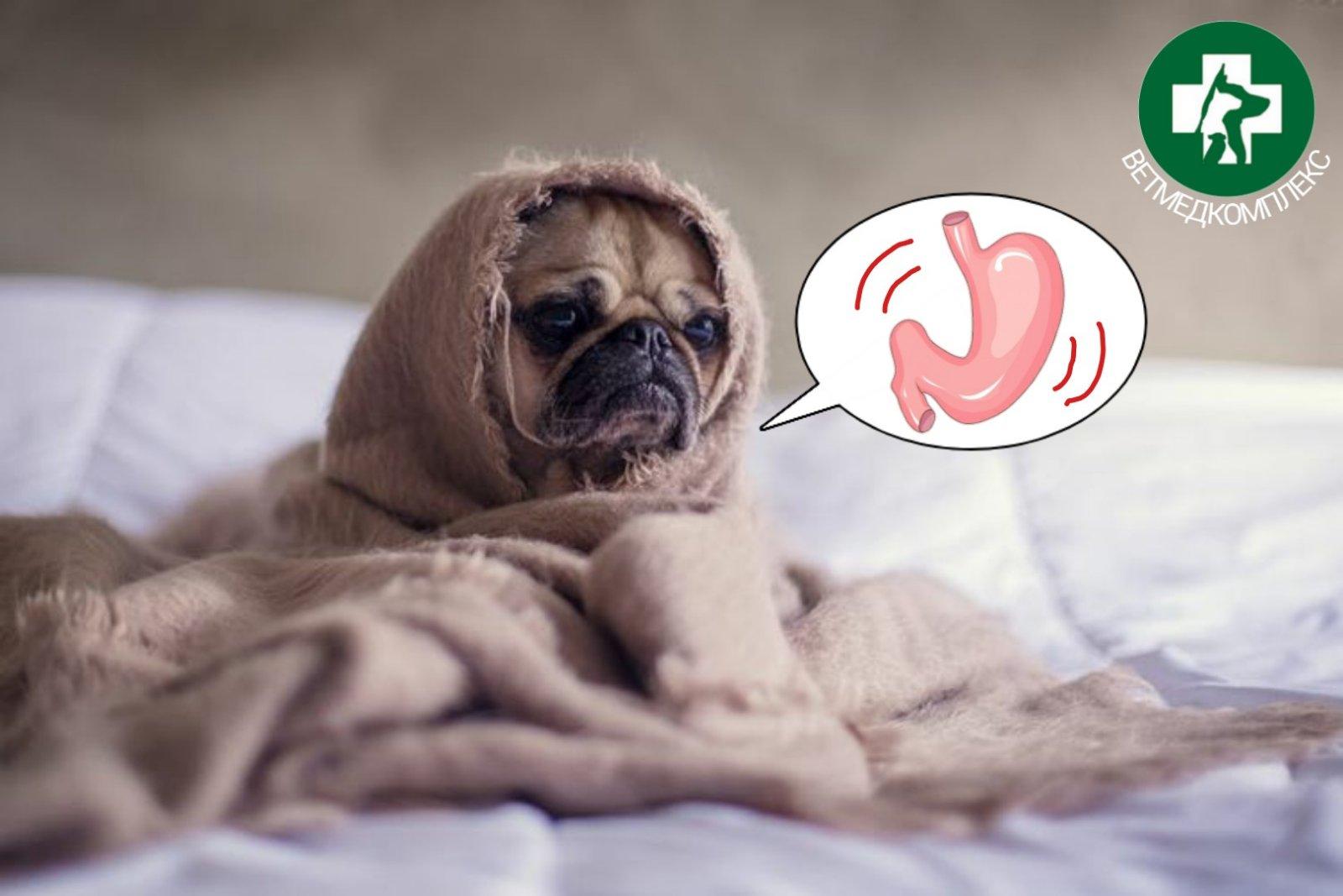 Час сну собак