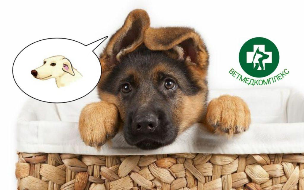 Вуха у собак