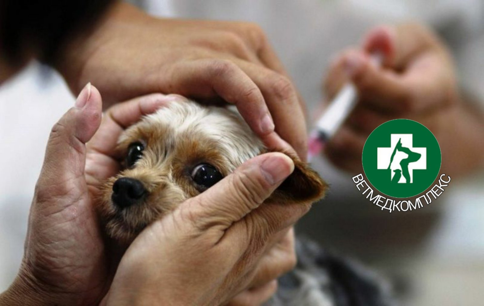 Вакцинація чотирьохлапих