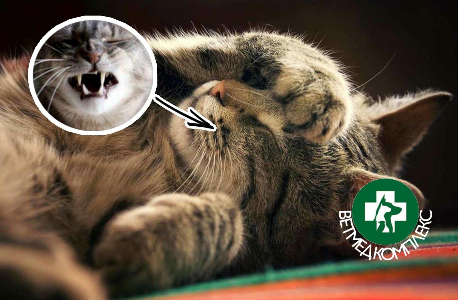 тече з носа у котика